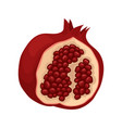 flat icon of open pomegranate delicious vector image vector image