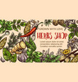 herb and spice sketch frame vector image vector image