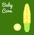 baby corn vector image vector image