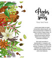 bakery card design with spices and herbs vector image vector image