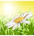 Green grass with daisy - summer background vector image vector image