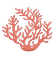 isolated coral reef vector image