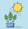 linear leaves plant with sun weather vector image vector image