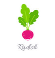 radish icon with title vector image