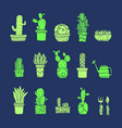 set fancy cactus plants vector image
