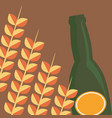 wheat spikes and beer bottle vector image