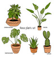 color houseplants set vector image