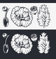 botanical set poppy flowers vector image