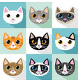 cats breeds vector image