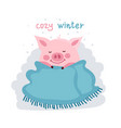 cute cartoon pig covered by blanket isolated on vector image