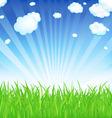fresh spring grass vector image vector image