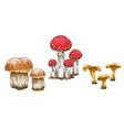 mushrooms orange cap boletus fly agaric vector image vector image