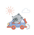 with a cheerful racoon in car vector image vector image