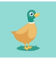 cartoon funny duck vector image vector image