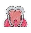 color crayon stripe cartoon internal tooth view vector image vector image
