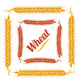 color vegetable square frame border gold ear vector image vector image