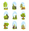 natural landscape with various trees set vector image vector image