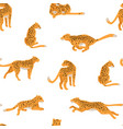 running and hunting cheetah spotted leopards vector image vector image
