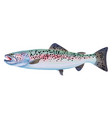 trout fish colorful vector image