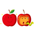 Fresh apple and rotten apple vector image