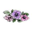 Hand drawn pansy flowers vector image vector image