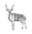 hand drawn greater kudu antelope vector image