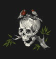 human skull on a branch with birds on a black vector image vector image