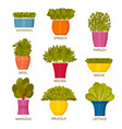 indoor gardening icons with lettuce vector image vector image