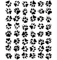 seamless pattern of print of dogs paws vector image vector image