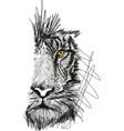 sketch of tiger face vector image vector image
