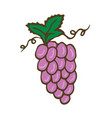 grape icon hand drawn print sticker vector image vector image