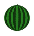 green watermelon icon vector image vector image