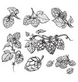 hand drawn engraving style hops set vector image
