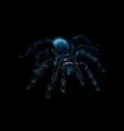 portrait of a spider tarantula grammostola vector image vector image