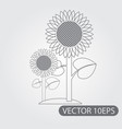 sunflowers icon black and white outline drawing vector image