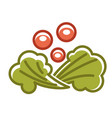 broccoli and berries vector image vector image