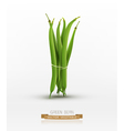 green beans bound sheaf isolated vector image vector image