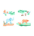 set of rare and endangered animal vector image