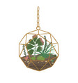 stylish hanging glass florarium isolated on white vector image vector image