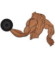 bodybuilder doing exercises with dumbbells vector image