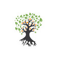 family tree logo template vector image