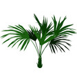 home palm tree vector image vector image