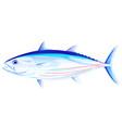 skipjack tuna fish vector image vector image