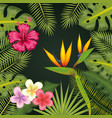 tropical flowers design vector image vector image