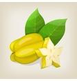 Star fruit Carambola vector image