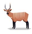 flat geometric bongo antelope vector image vector image