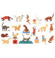 funny cats cute adorable kitty cats sleeping vector image