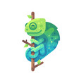 green and blue chameleon sitting on a tree branch vector image vector image