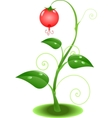 nature plant vector image
