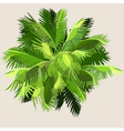 painted palm leaves gathered into a ball vector image vector image